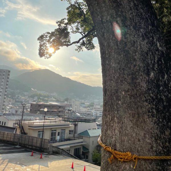 御神木と朝日